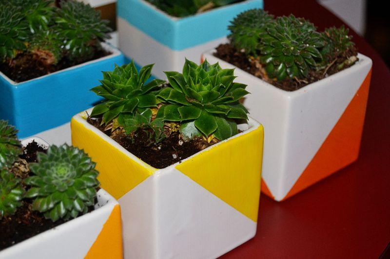 Succulentgift3